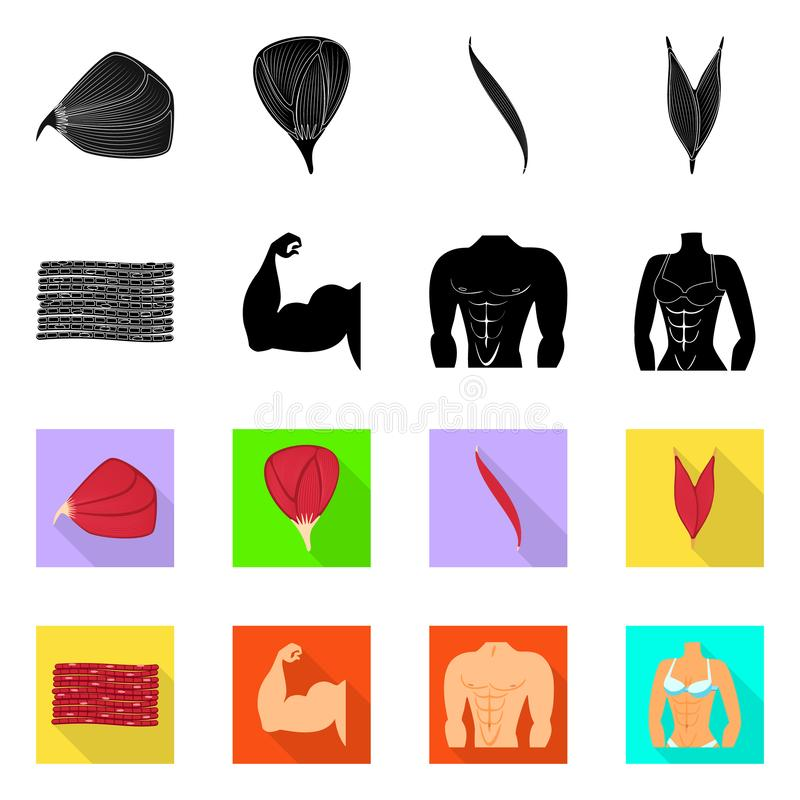 Vector design of fiber and muscular logo. Collection of fiber and body stock symbol for web. Vector illustration of fiber and muscular icon. Set of fiber and vector illustration