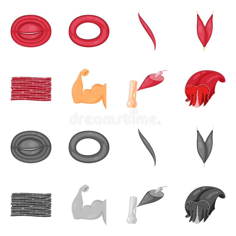 Vector design of fiber and muscular sign. Set of fiber and body  stock symbol for web. Vector illustration of fiber and muscular logo. Collection of fiber and stock illustration