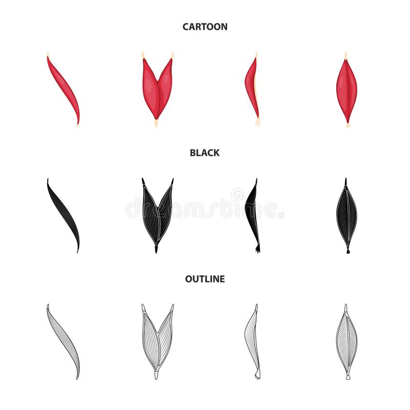 Vector design of fiber and muscular sign. Collection of fiber and body stock symbol for web. Vector illustration of fiber and muscular logo. Set of fiber and royalty free illustration