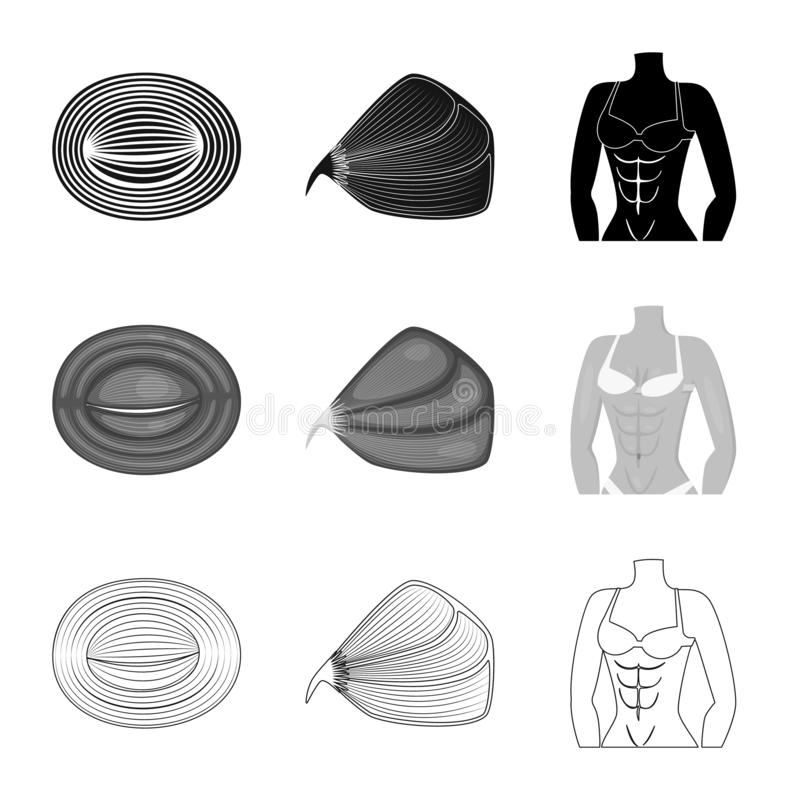 Vector illustration of fiber and muscular logo. Set of fiber and body stock vector illustration. Isolated object of fiber and muscular icon. Collection of fiber royalty free illustration
