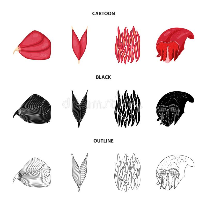 Vector design of fiber and muscular sign. Collection of fiber and body stock vector illustration. Vector illustration of fiber and muscular logo. Set of fiber royalty free illustration