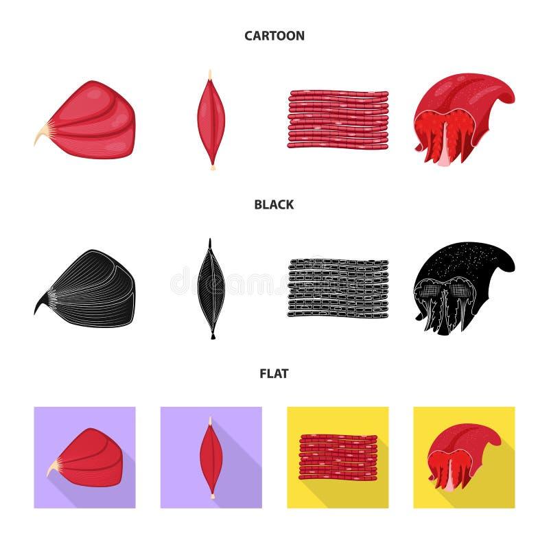 Vector design of fiber and muscular symbol. Set of fiber and body vector icon for stock. Vector illustration of fiber and muscular sign. Collection of fiber and vector illustration
