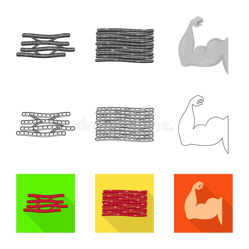 Vector design of fiber and muscular symbol. Set of fiber and body  stock vector illustration. Vector illustration of fiber and muscular sign. Collection of vector illustration