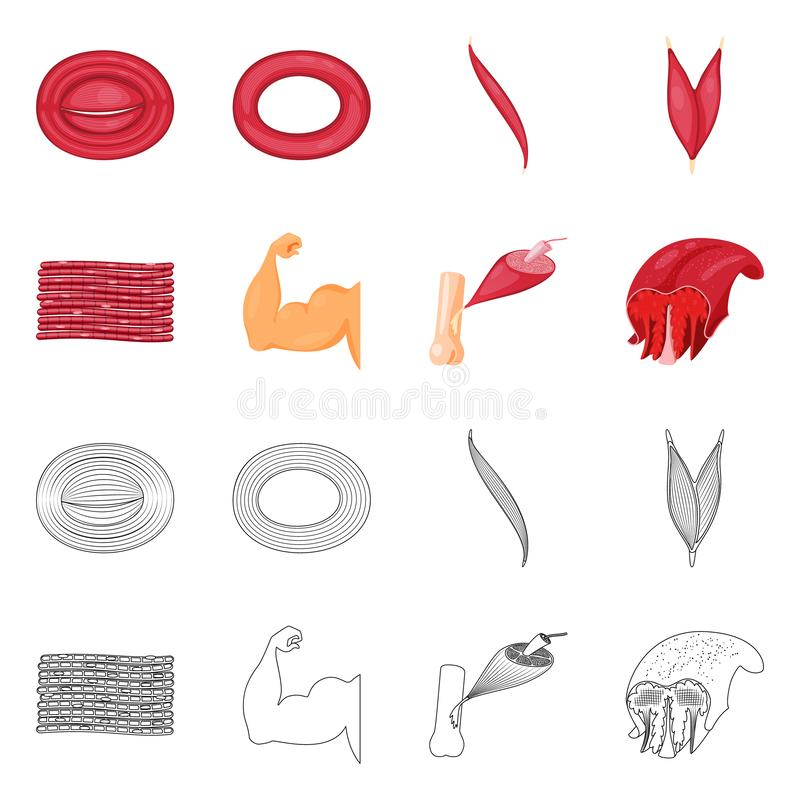 Vector illustration of fiber and muscular sign. Set of fiber and body  stock symbol for web. Isolated object of fiber and muscular logo. Collection of fiber and vector illustration
