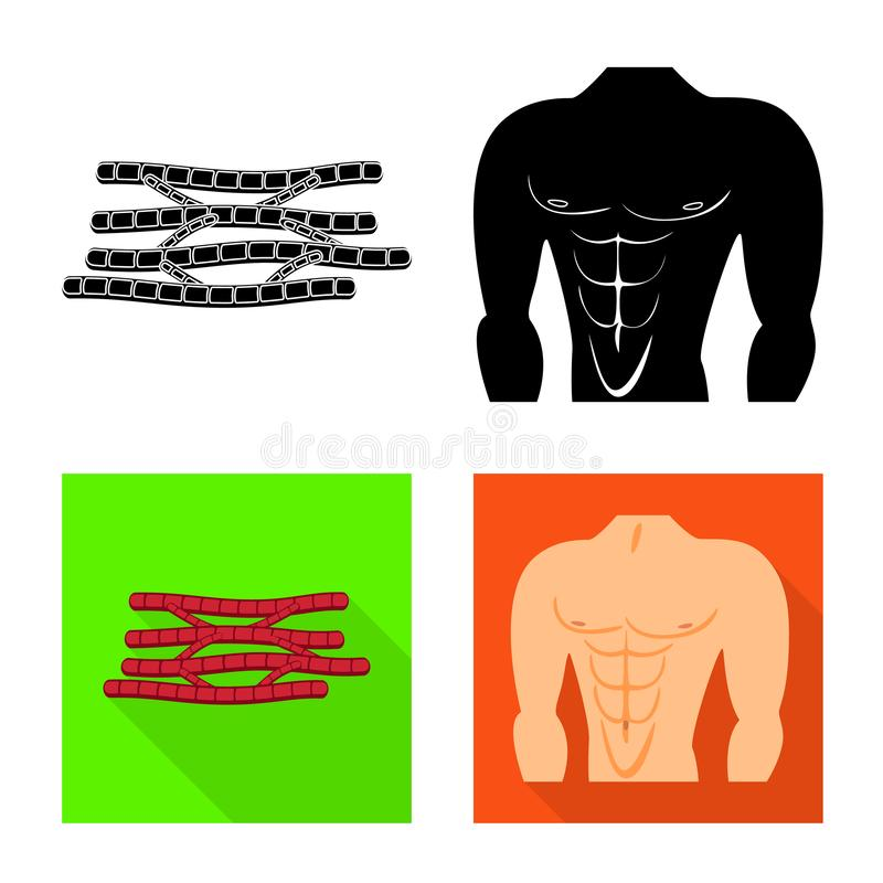 Vector illustration of fiber and muscular sign. Set of fiber and body vector icon for stock. Isolated object of fiber and muscular logo. Collection of fiber and stock illustration
