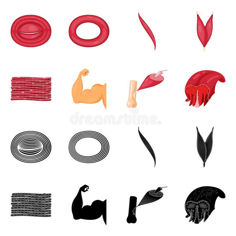 Vector design of fiber and muscular symbol. Collection of fiber and body stock vector illustration. Vector illustration of fiber and muscular sign. Set of fiber stock illustration