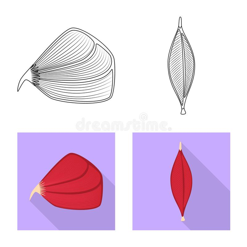 Vector design of fiber and muscular icon. Set of fiber and body  stock symbol for web. Vector illustration of fiber and muscular symbol. Collection of fiber and stock illustration