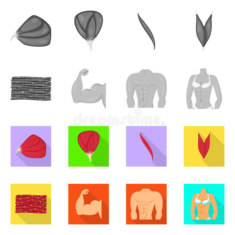Vector design of fiber and muscular icon. Set of fiber and body stock symbol for web. Vector illustration of fiber and muscular symbol. Collection of fiber and vector illustration