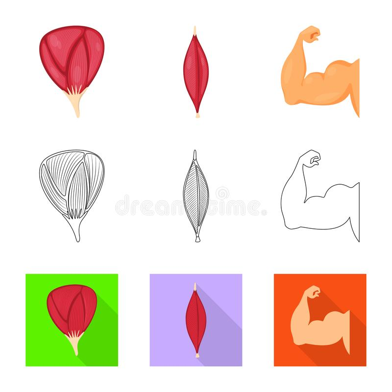 Vector illustration of fiber and muscular symbol. Collection of fiber and body  vector icon for stock. Isolated object of fiber and muscular sign. Set of fiber royalty free illustration