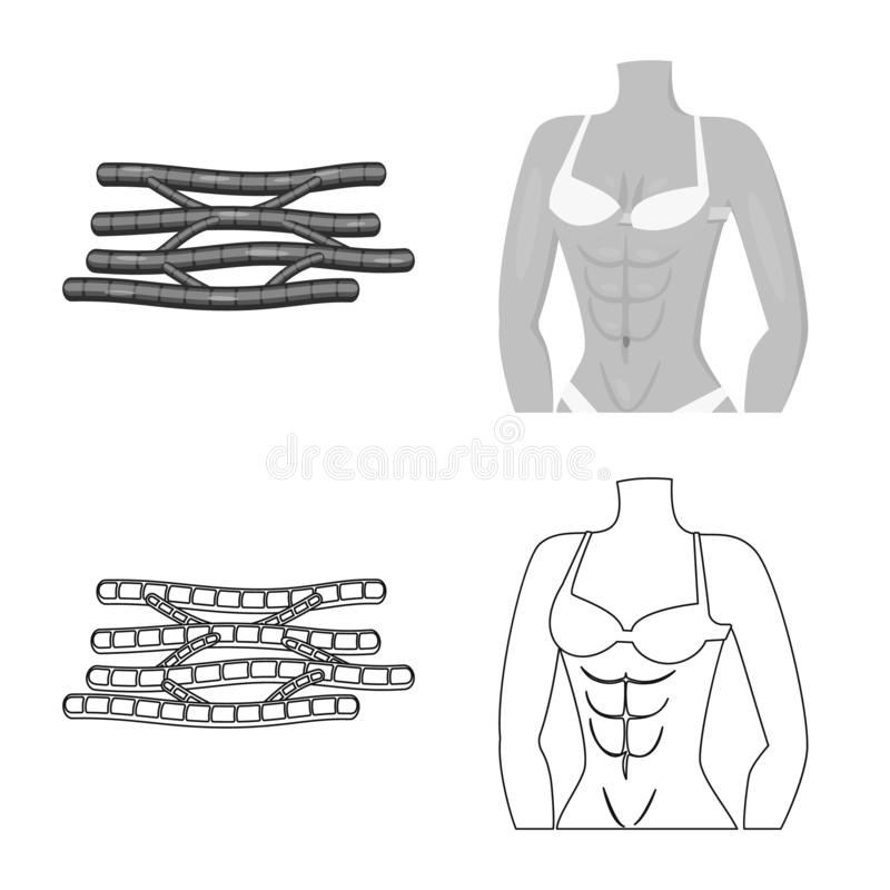 Vector illustration of fiber and muscular symbol. Collection of fiber and body vector icon for stock. Isolated object of fiber and muscular sign. Set of fiber vector illustration