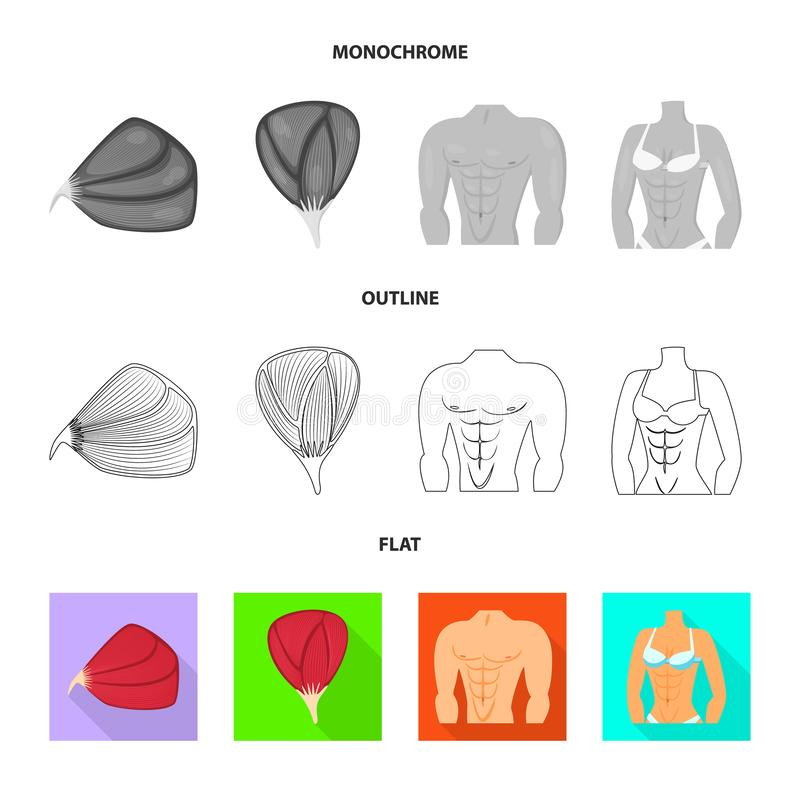 Vector illustration of fiber and muscular symbol. Set of fiber and body  stock vector illustration. Isolated object of fiber and muscular sign. Collection of vector illustration