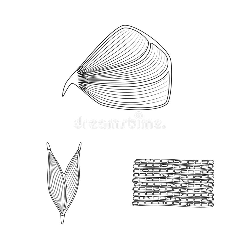 Vector illustration of fiber and muscular symbol. Set of fiber and body stock symbol for web. Isolated object of fiber and muscular sign. Collection of fiber vector illustration