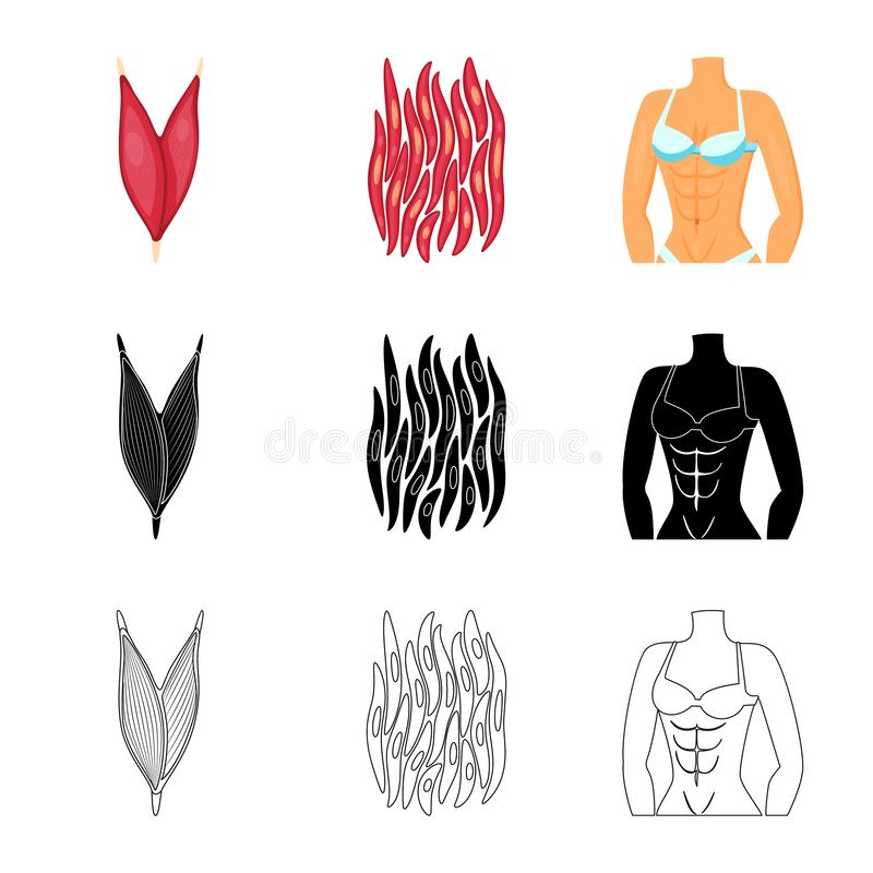 Vector design of fiber and muscular icon. Collection of fiber and body stock vector illustration. Vector illustration of fiber and muscular symbol. Set of fiber vector illustration