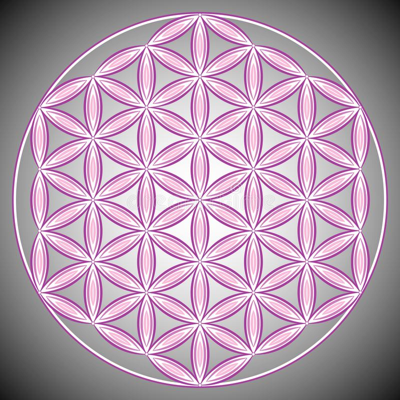 Vector Illustration. Flower of Life. royalty free illustration