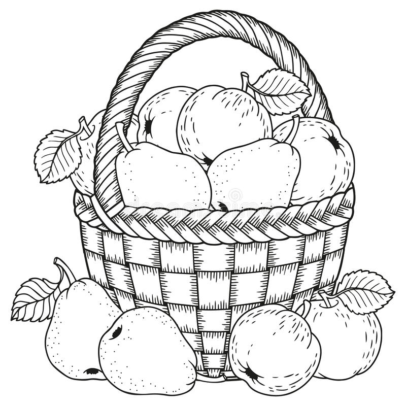 Free Vector Illustration For Coloring. Thanksgiving Day. Harvest Of Apples And Pears In A Basket Royalty Free Stock Image - 98352176