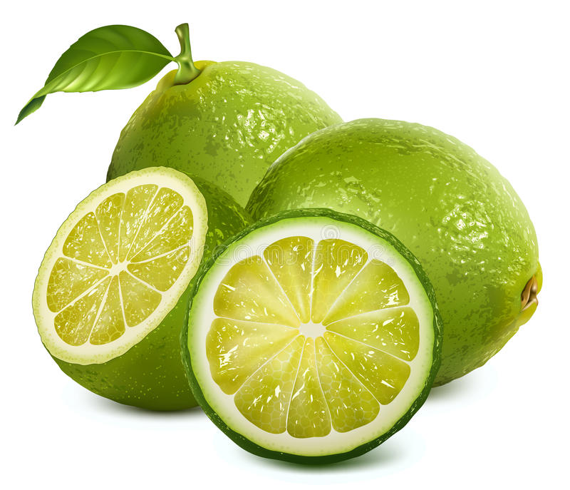 Fresh limes with leaves royalty free illustration