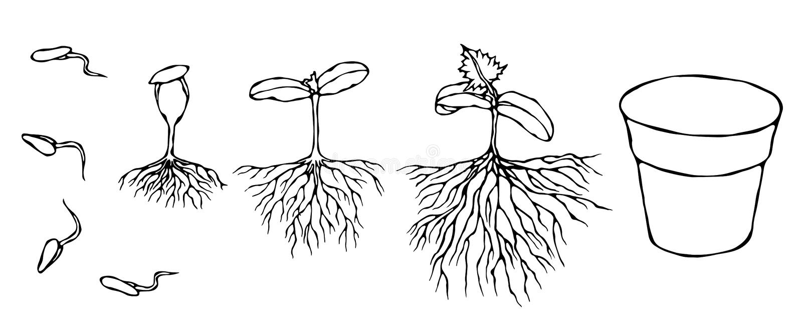 Vector Illustration of Germ and Seeds Sprout with Roots in Ground. Seedling, Shoot, Sapling Gardening Plant. Trees stock illustration