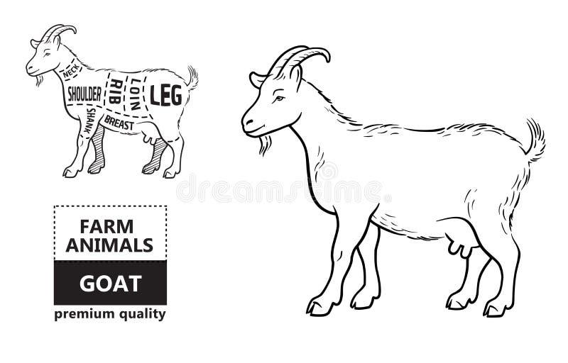 download a diagram of goat