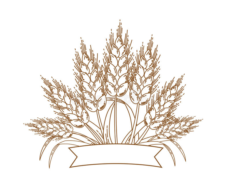 Vector illustration of gold ripe wheat ears. Icon, Logo or design element. Isolated on white background royalty free illustration