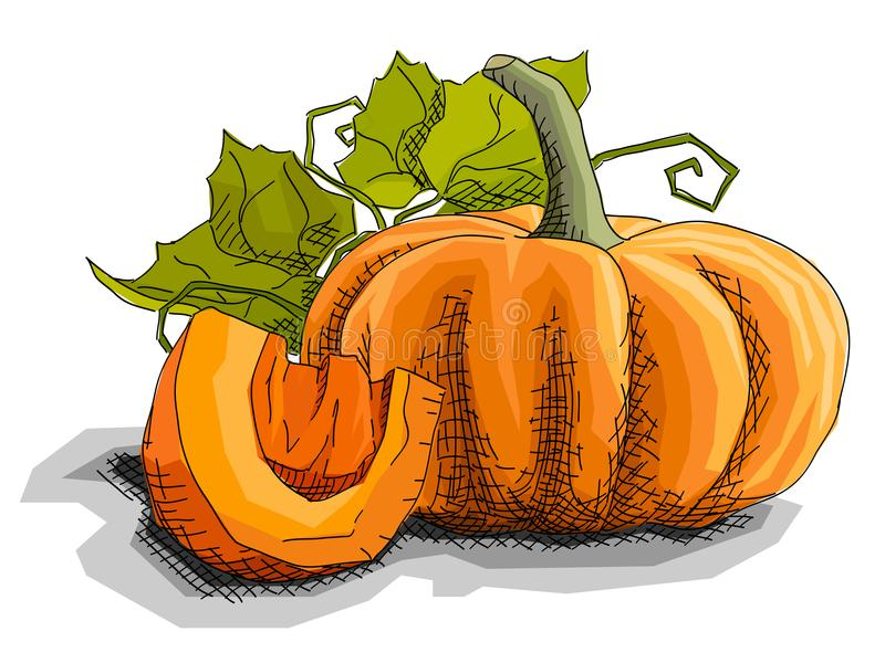 Vector illustration of drawing vegetable pumpkin. royalty free illustration