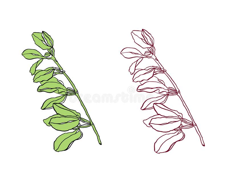 Vector Decorative branch of green leaves with streaky. Vector illustration green leaves with streaky on white background stock illustration