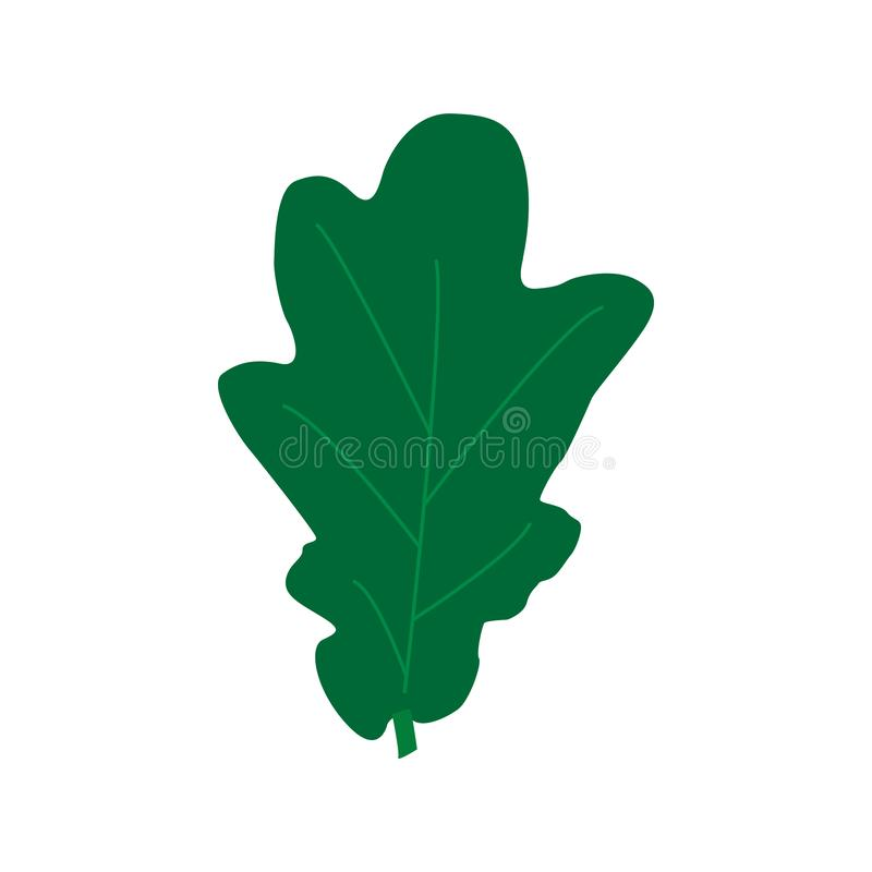 Green oak leaves isolated on white background. Flat style. Vector illustration. Green oak leaves isolated on white background. Flat style stock illustration