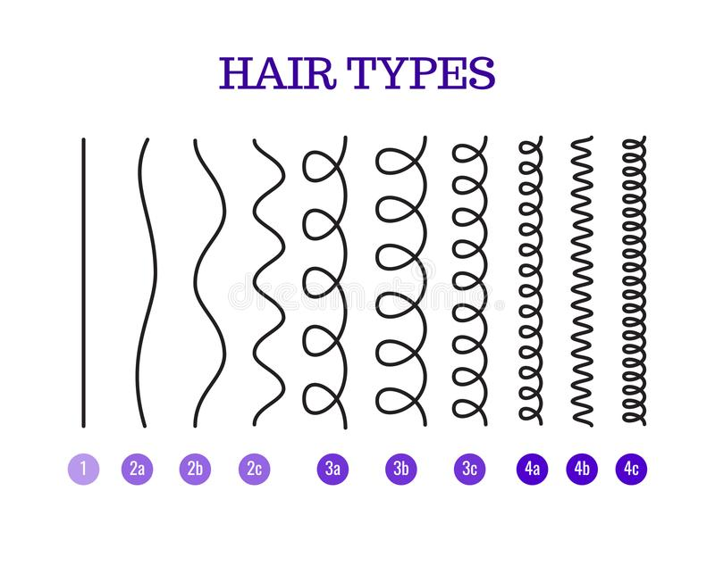 Vector Illustration of a Hair Types chart displaying all types and labeled. royalty free illustration