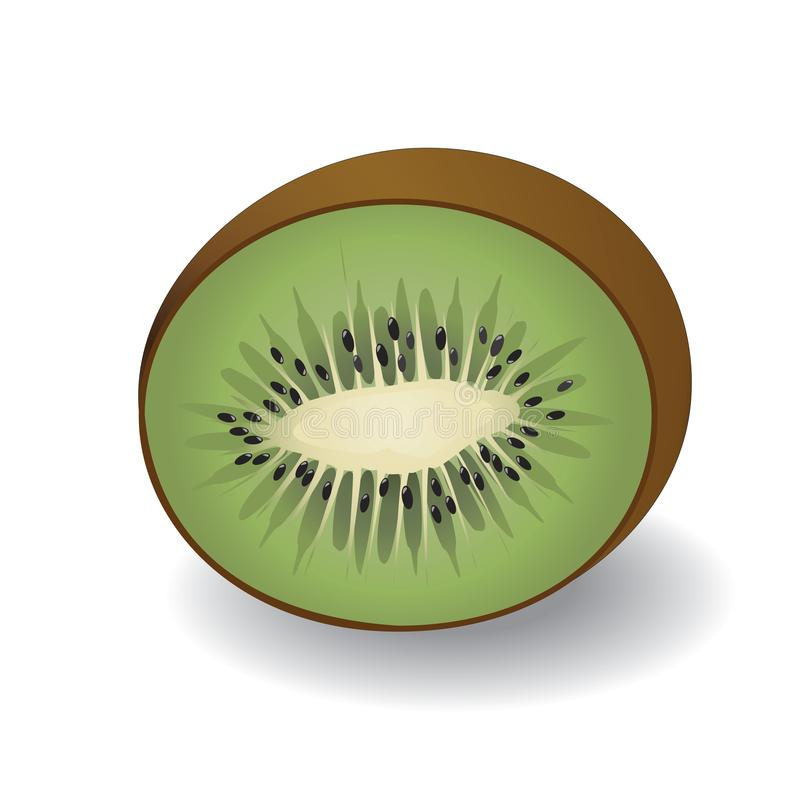 Vector Illustration of a half kiwi fruit royalty free stock images