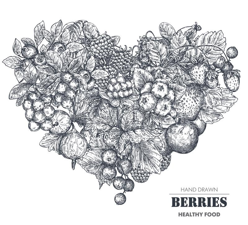 Vector illustration of hand drawn vector berries in heart form. Sketch style. stock illustration
