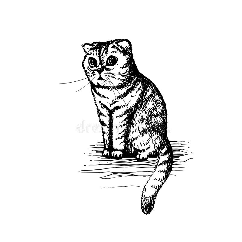 Cute kitty sitting hand drawn illustration sketch stock illustration