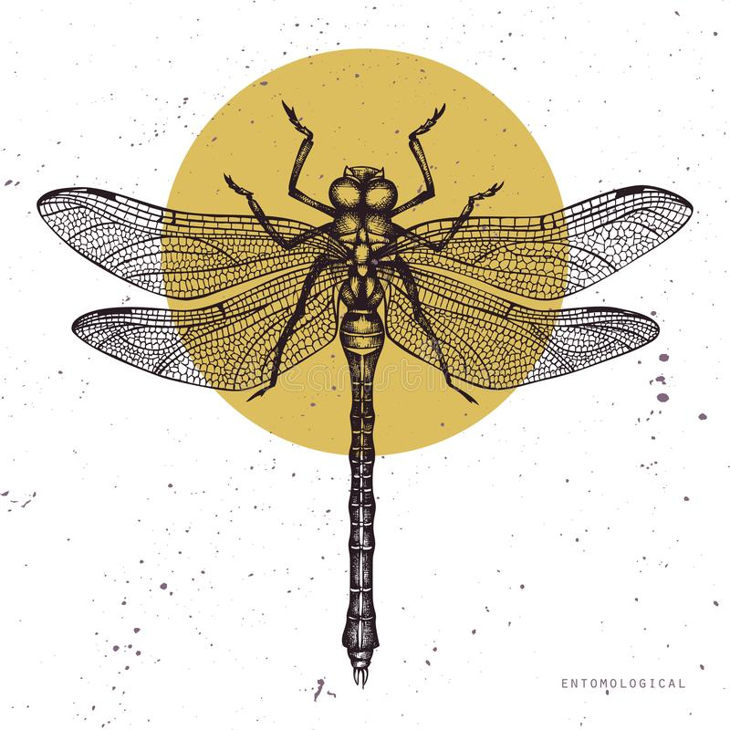Vector illustration of hand drawn dragonfly. Vintage insects sketch collection. Spring design template. stock illustration