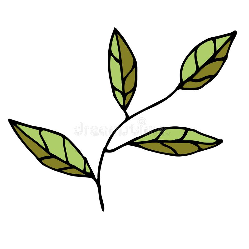 Hand drawn doodle tree branch isolated on white background. Floral element. Vector illustration stock illustration
