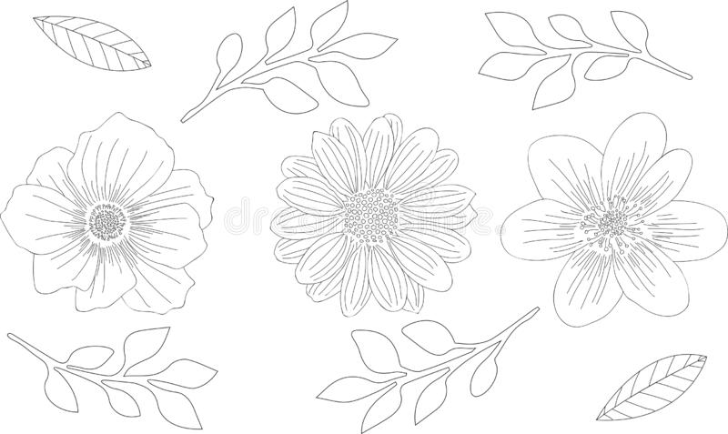 Vector illustration. Hand drawn flowers. Sketch with line-art isolated on white background. royalty free illustration