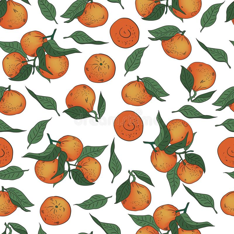 Vector illustration. Hand drawn Mandarins, clementines, citrus. Mandarin seamless pattern. Seamless vector pattern of whole tangerines and leaves on a white vector illustration