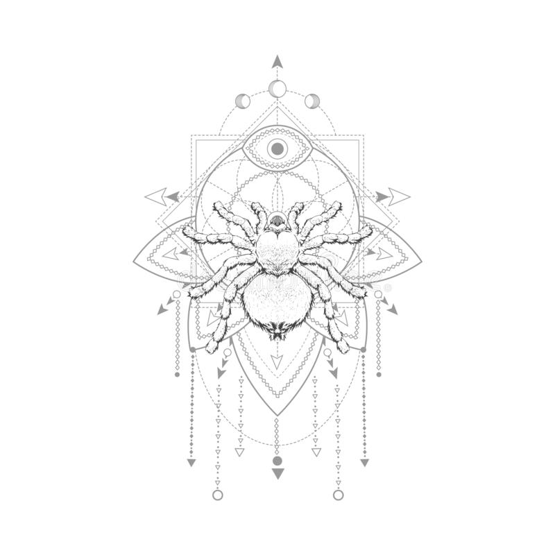 Vector illustration with hand drawn spider and Sacred geometric symbol on white background. Abstract mystic sign. Black linear sha vector illustration