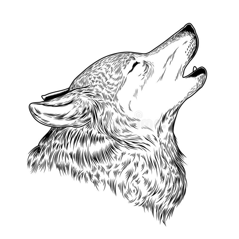Vector illustration of a howling wolf. Engraving. Print for T-shirts stock illustration