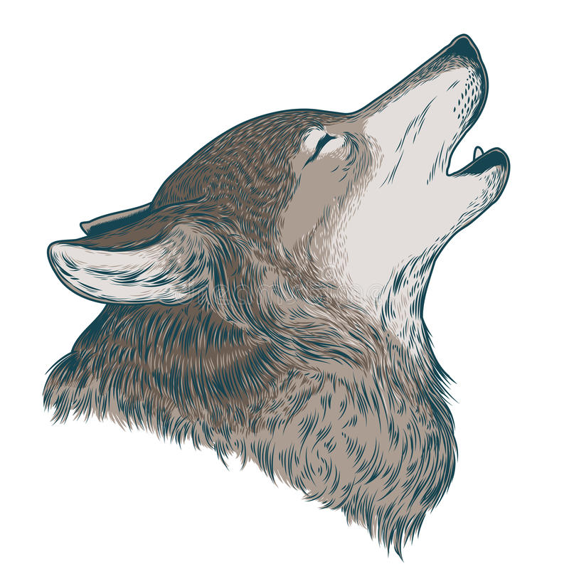 Vector illustration of a howling wolf. Engraving. Print for T-shirts vector illustration