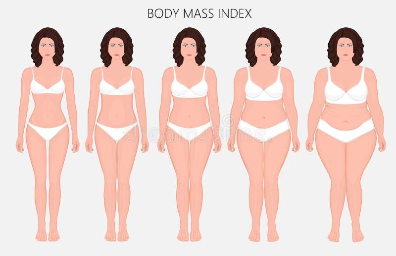 Human body anatomy_Body mass Index of European women from lack o. Vector illustration Human body mass Index, European woman from lack of weight to obesity Front vector illustration