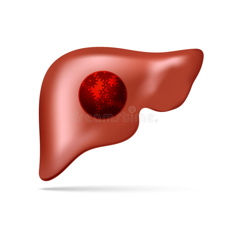 Vector illustration of human liver with gear and cogwheel stock photo