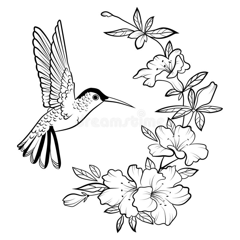 vector illustration hummingbird stylized flying bird drawing ornaments linear art black white drawing hand vector