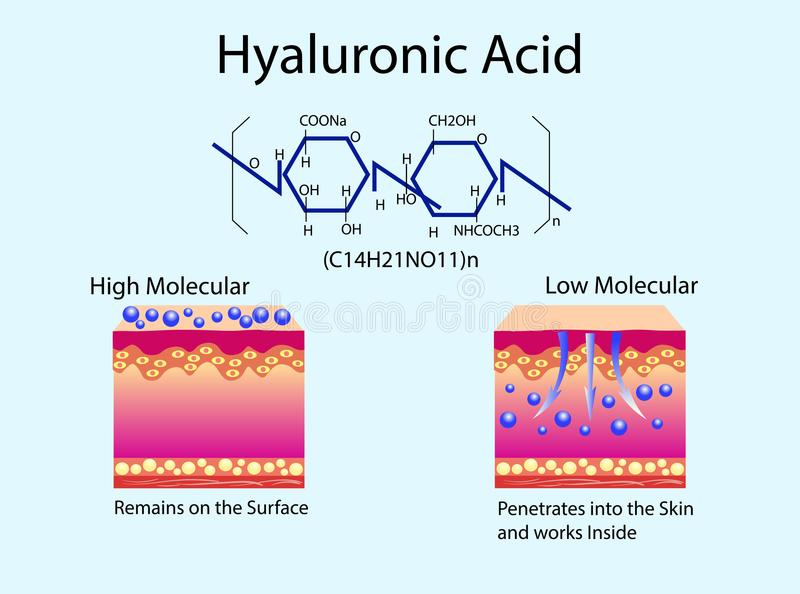 Vector illustration with Hyaluronic acid in skin-care products. Low molecular and High molecular. stock illustration