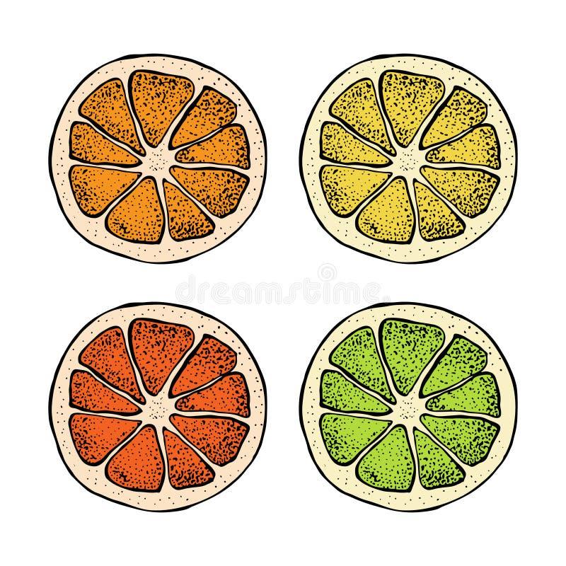 Vector illustration with ink hand drawn citrus fruit, slices pieces sketch. Mandarin orange, tangerine, lime, grapefruit. Lemon isolated on white background stock illustration