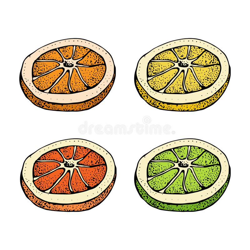 Vector illustration with ink hand drawn citrus fruit, slices pieces sketch. Mandarin orange, tangerine, lime, grapefruit. Lemon isolated on white background vector illustration
