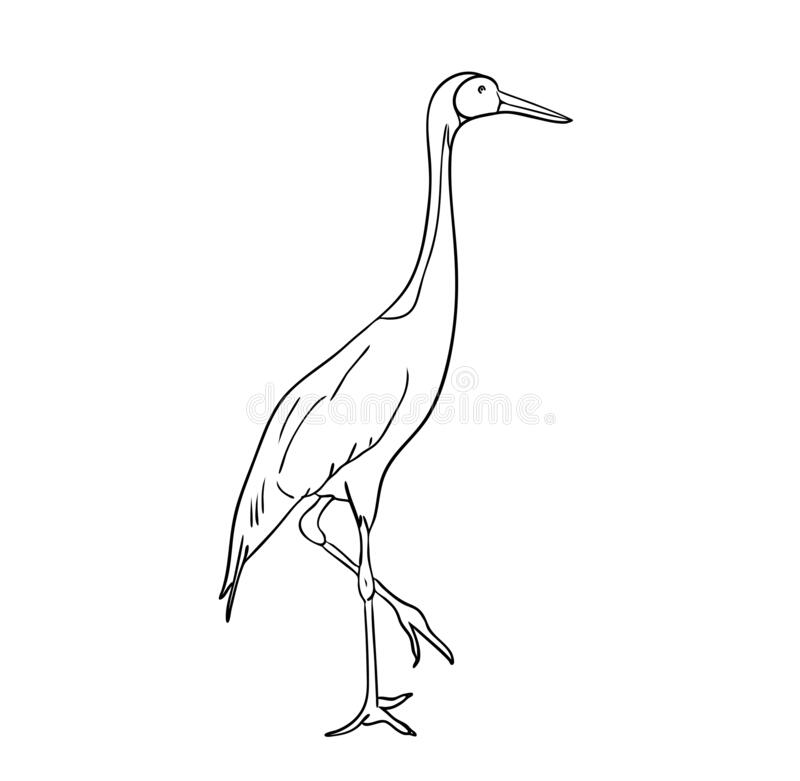 Vector illustration, isolated crane in black and white colors, outline original hand painted drawing. Vector illustration, isolated crane bird in black and white stock illustration
