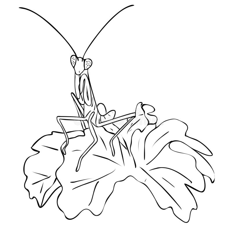 Isolated insect mantis in leaves in black and white colors, outline original hand painted drawing. Vector illustration, isolated insect mantis in leaves in black stock illustration