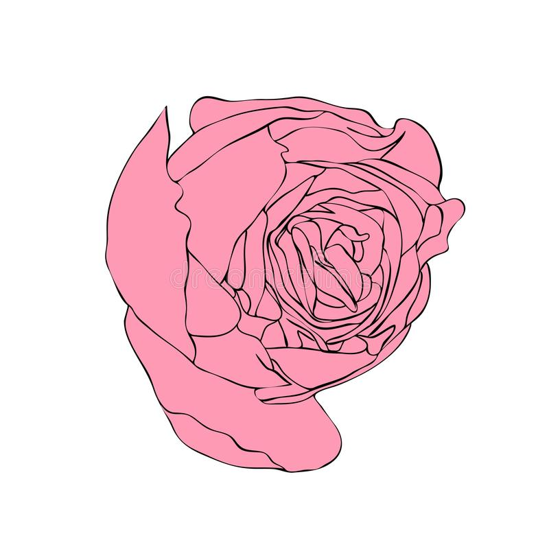 Vector illustration of rose bud vector illustration