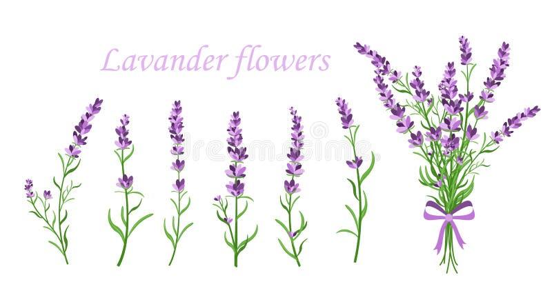 Vector illustration of lavender flower on different shape branches on white background. Vintage France provence concept stock illustration