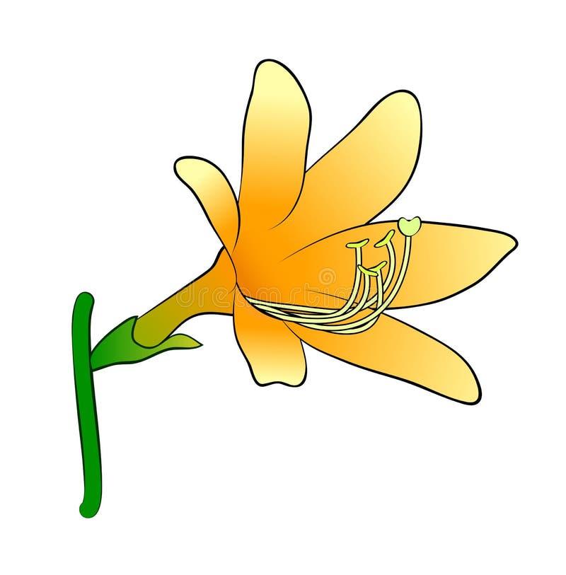 Vector illustration of lily flower stock illustration