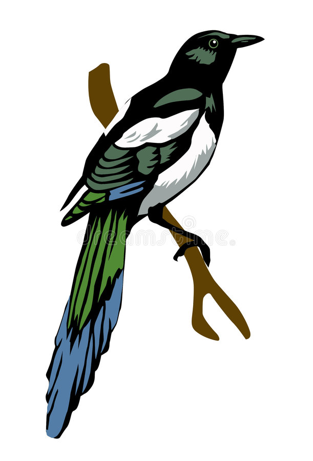Download Vector illustration magpie stock vector. Image of creative - 8033752