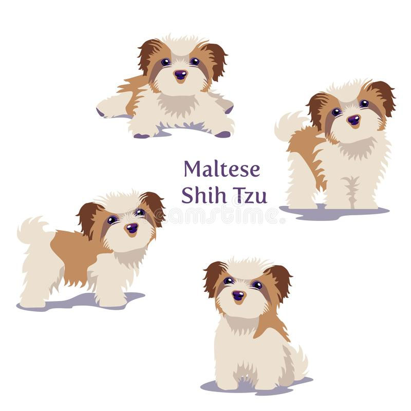 Vector illustration of Maltese Dogs puppies in different poses. stock illustration